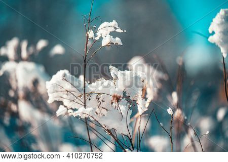 Abstract Snow Leaves Silhouette Macro In Sun Light