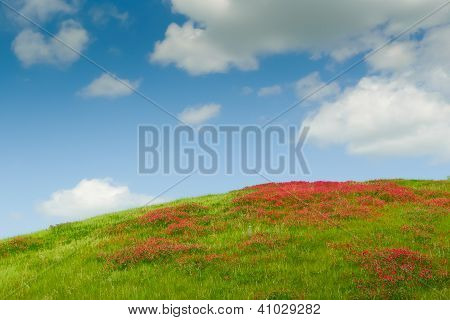Flowers On The Hill