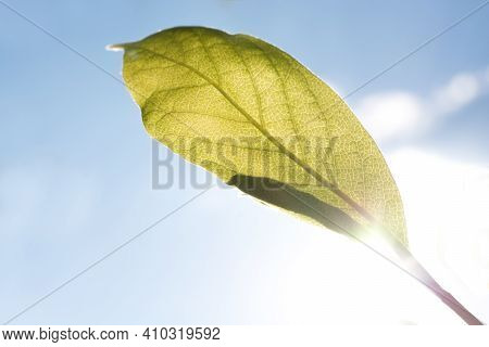 Concept Of Green Renewable Energy. Green Leaf With Blue Sky And Sun In The Background.