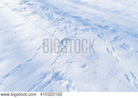 Lot Of Different Animal Tracks In The Snow