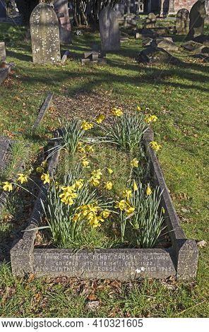 Weston-super-mare, Uk - February 25, 2021: Daffodils Growing On A Grave In Milton Road Cemetery