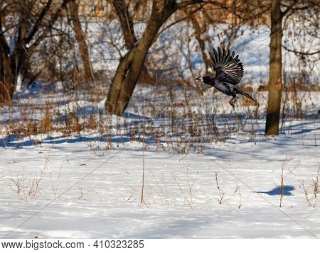 The Takeoff And Flutter Of The Wings Of A Black Crow Against The Backdrop Of A Snow-covered City Par