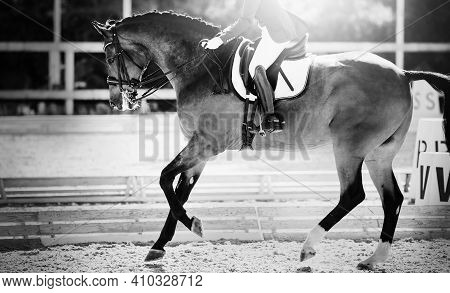 Equestrian Sport. The Leg Of The Rider In The Stirrup, Riding On A Red Horse. Dressage Of The Bay Ho