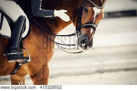 Equestrian Sport. Praise The Horse. Portrait Sports Stallion In The Bridle. The Leg Of The Rider In