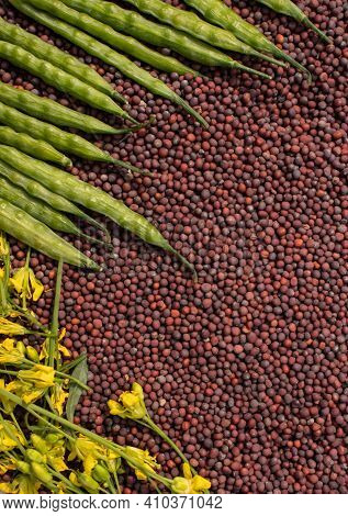 Black Mustard Seeds With Mustard Pods And Flowers With Copy Space In Vertical Orientation