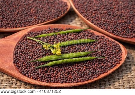 Closeup Of Mustard Pods And Flower On Black Mustard Seeds In Wooden Ladle
