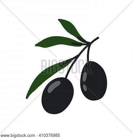 Olive Branches. Vector Illustration For Deisgn, Patterns, Wreaths, Web, Olive Oil Logo. Green Olives