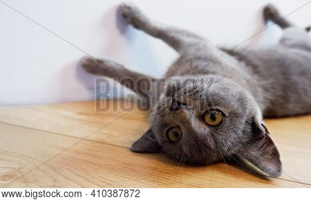 The Gray Kitten Sprawled Upside Down On The Warm Floor.
