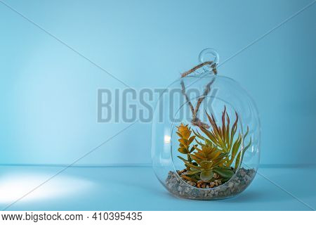 Tillandsia Air Plant With Stones In A Glass Jar Ocean Vibe Wall Mockup