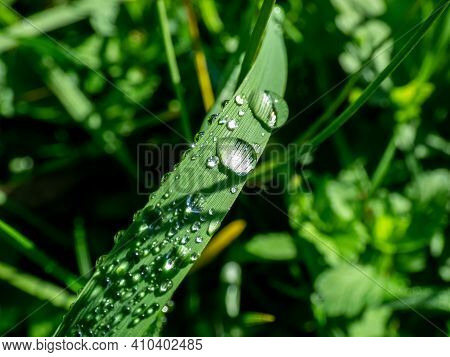 Group Of Perfect Water Drops (dew-drops) On Green Leaf With Bright Light Reflections And Grass Backg