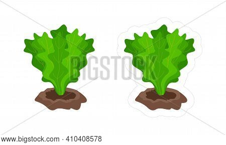 Vector Sticker Of Lettuce Growing From The Ground With White Die Cut Outline For Game. Cartoon Vecto