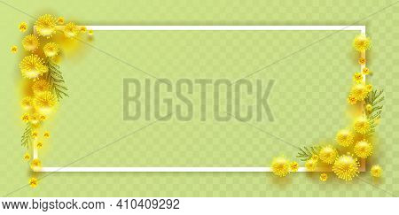 Yellow Mimosa Flower On Transparent Background Decor. Acacia Symbol Womens Day. Greeting Card Templa