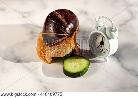 The Achatina Snail Eats A Cucumber. Alarm Clock On The Table. Dinner Time. Meals By The Hour. Diet.