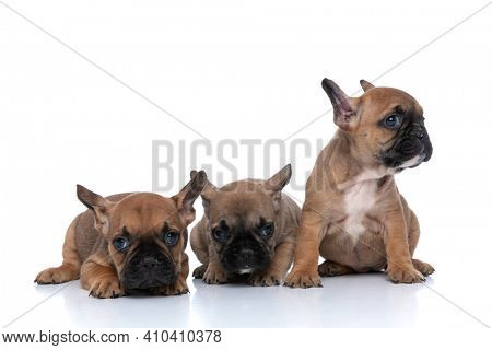three french bulldog dogs looking away, having a beautiful fawn fur and sitting next to each other