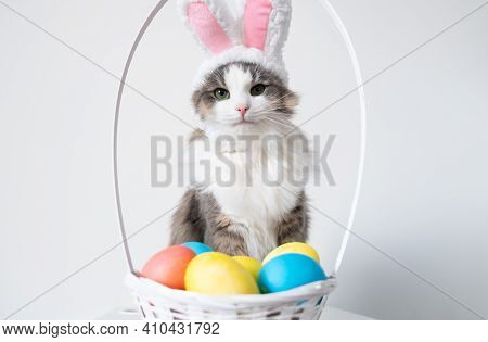 A Cute Funny Gray Cat In Bunny Ears Sits On A White Background With A Basket Of Colored Eggs. Cat In