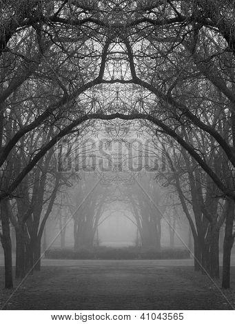 Mysterious Foggy Park