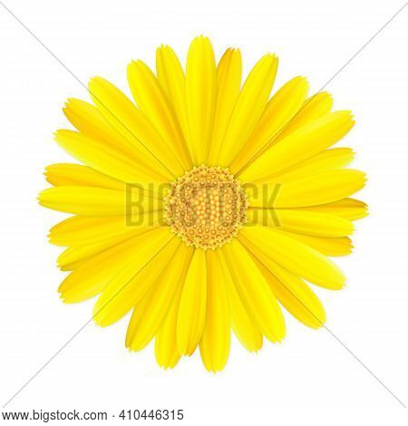 Top View Of Realistic 3d Orange And Yellow Calendula Or Marigold Flower Bud Isolated On White Backgr