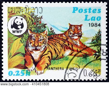 Laos - Circa 1984: A Stamp Printed In Laos Shows Tiger, Panthera Tigris, Is The Largest Cat Species,