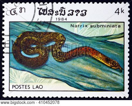 Laos - Circa 1984: A Stamp Printed In Laos Shows Red-necked Keelback, Natrix Subminiata, Is A Specie