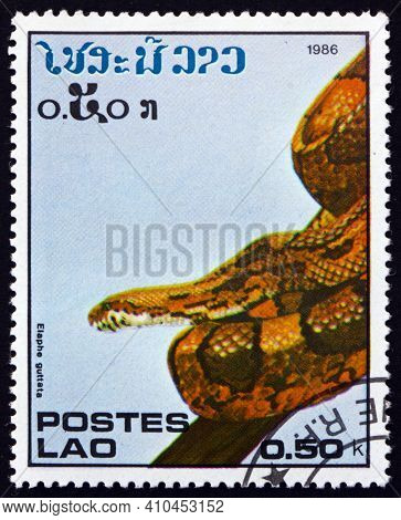 Laos - Circa 1986: A Stamp Printed In Laos Shows Corn Snake, Elaphe Guttata, Is A North American Spe
