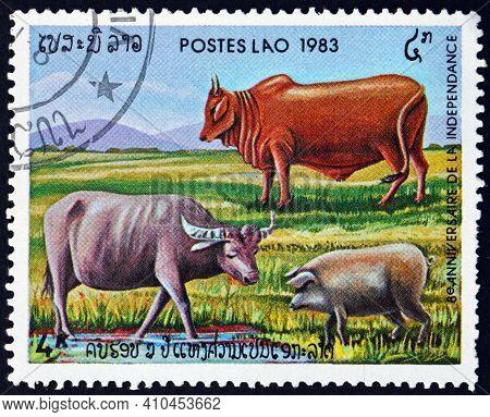Laos - Circa 1983: A Stamp Printed In Laos Shows Oxen And Pig, Circa 1983
