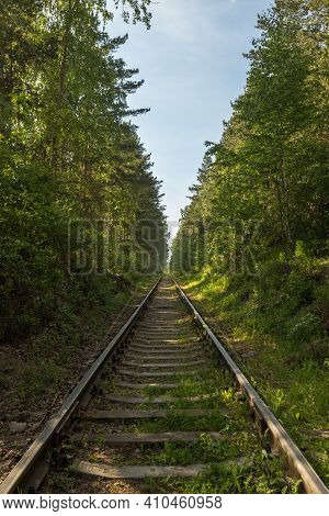 Railway Passing Between Trees With Green Foliage In Forest
