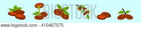 Set Of Argan Fruit Oil Cartoon Icon Design Template With Various Models. Modern Vector Illustration