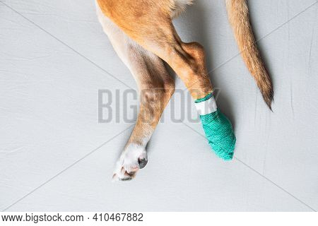Dog's Paws In A Bandage, Close-up View. Wounded Pets, Trauma, Hurt Leg Of A Puppy, Veterinary Concep
