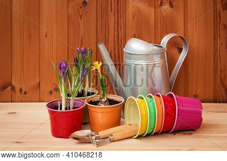 Gardening Tools, Empty Flower Pots, Purple Crocuses And Daffodil On Wooden Table. Selective Focus. C