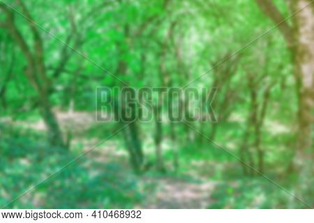 Blurred Background Of Trees In Forest Thicket On Sunny Summer Day. Natural Backdrop For Design And D