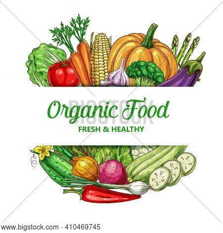 Farm Vegetable Vector Frame With Organic Food Squash, Chili Pepper And Cauliflower With Garlic. Onio