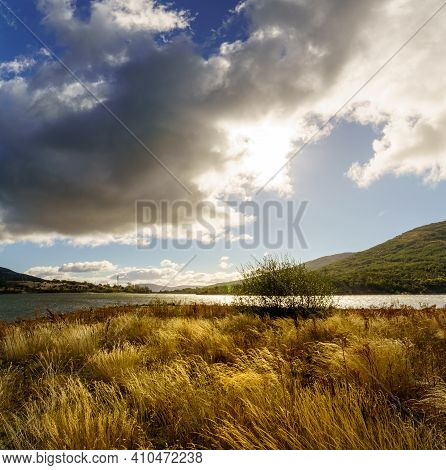 Country Landscape With Tall Wild Grasses With Golden Tones In Spring, Blue Sky With Dark Clouds And