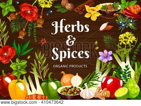 Herbs And Vector Poster With Mint, Poppy And Dill, Nutmeg, Mustard And Vanilla, Shallots, Ginger And