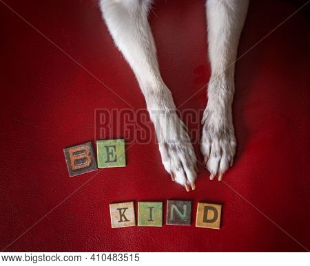 cute chihuahua paws with letters spelling out be kind