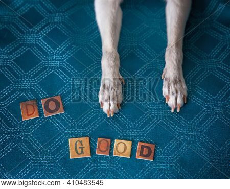 cute chihuahua paws with letters spelling out do good