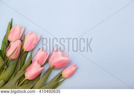 Bunch Of Pink Tulips Isolated On Blue Pastel Background Copy Space. Spring Flowers For Mothers Day,