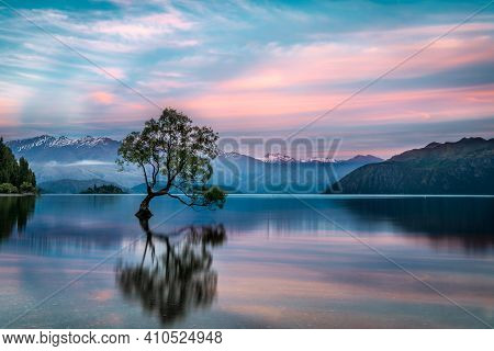 Lake Wanaka Tree Classic Shot During A Bright And Vibrant Pink And Blue Sunrise With Foggy Mountain