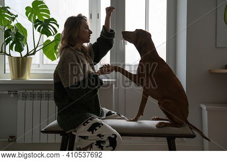 Happy Woman Owner Playing Her Vizsla Dog At Home, Sitting On Bench. Female Holding The Pet By The Pa