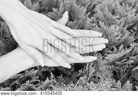 Take Care Of Your Hands. Female Hands With French Manicure On Natural Background. Fingernail Care. B