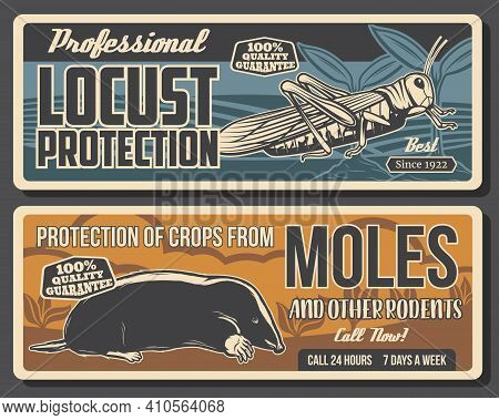 Garden Pest Control And Crops Protection Against Rodents Banners. Garden Locust On Field And Mole Sk