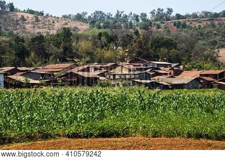 An Indian Rural Or Village Or Countryside Houses Surrounding With Sunflower Agricultural Land In Sum