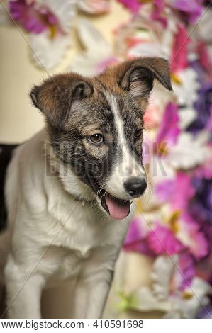White With Brown Spots Puppy Pooch On A Background Of Flowers In The Studio