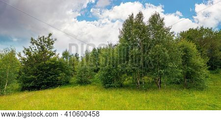 Trees On The Hill In Summer Scenery. Beautiful Mountain Landscape On A Cloudy Day