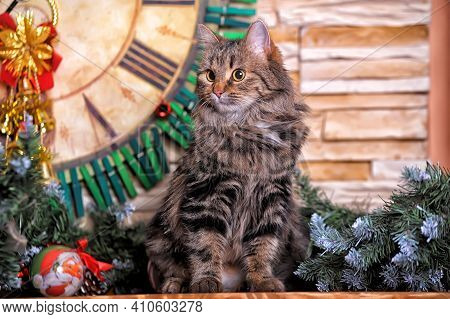 Beautiful Brown With Stripes Norwegian Forest Cat In Christmas