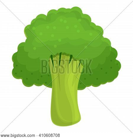 Cabbage Broccoli Icon. Cartoon Of Cabbage Broccoli Vector Icon For Web Design Isolated On White Back