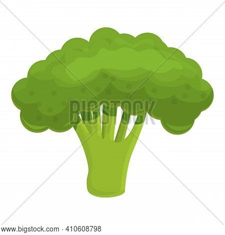 Harvest Broccoli Icon. Cartoon Of Harvest Broccoli Vector Icon For Web Design Isolated On White Back