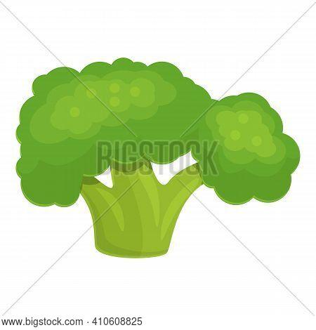 Eco Broccoli Icon. Cartoon Of Eco Broccoli Vector Icon For Web Design Isolated On White Background
