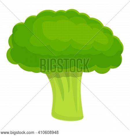 Whole Broccoli Icon. Cartoon Of Whole Broccoli Vector Icon For Web Design Isolated On White Backgrou