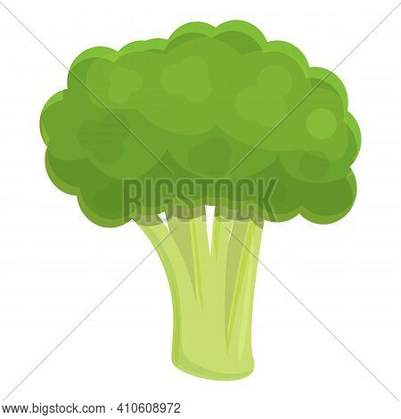 Gastronomy Broccoli Icon. Cartoon Of Gastronomy Broccoli Vector Icon For Web Design Isolated On Whit