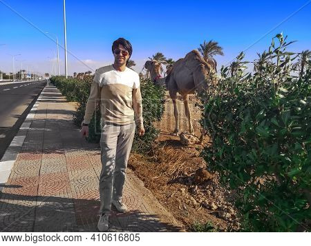 Caucasian Man Smiling Posing Against The Backdrop Of A One-humped Camel On The Street Of Sharm El Sh